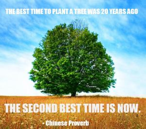 Time to plant a tree