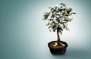 Money-tree-571x375